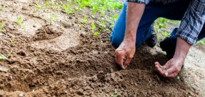 Kneeling and planting